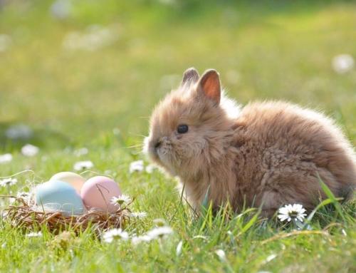 Cum îți afectează restricțiile vacanța de 1 mai și de Paște